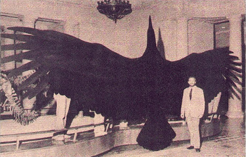 giant-thunderbird-56c0d4de5f9b5829f86738ca.png