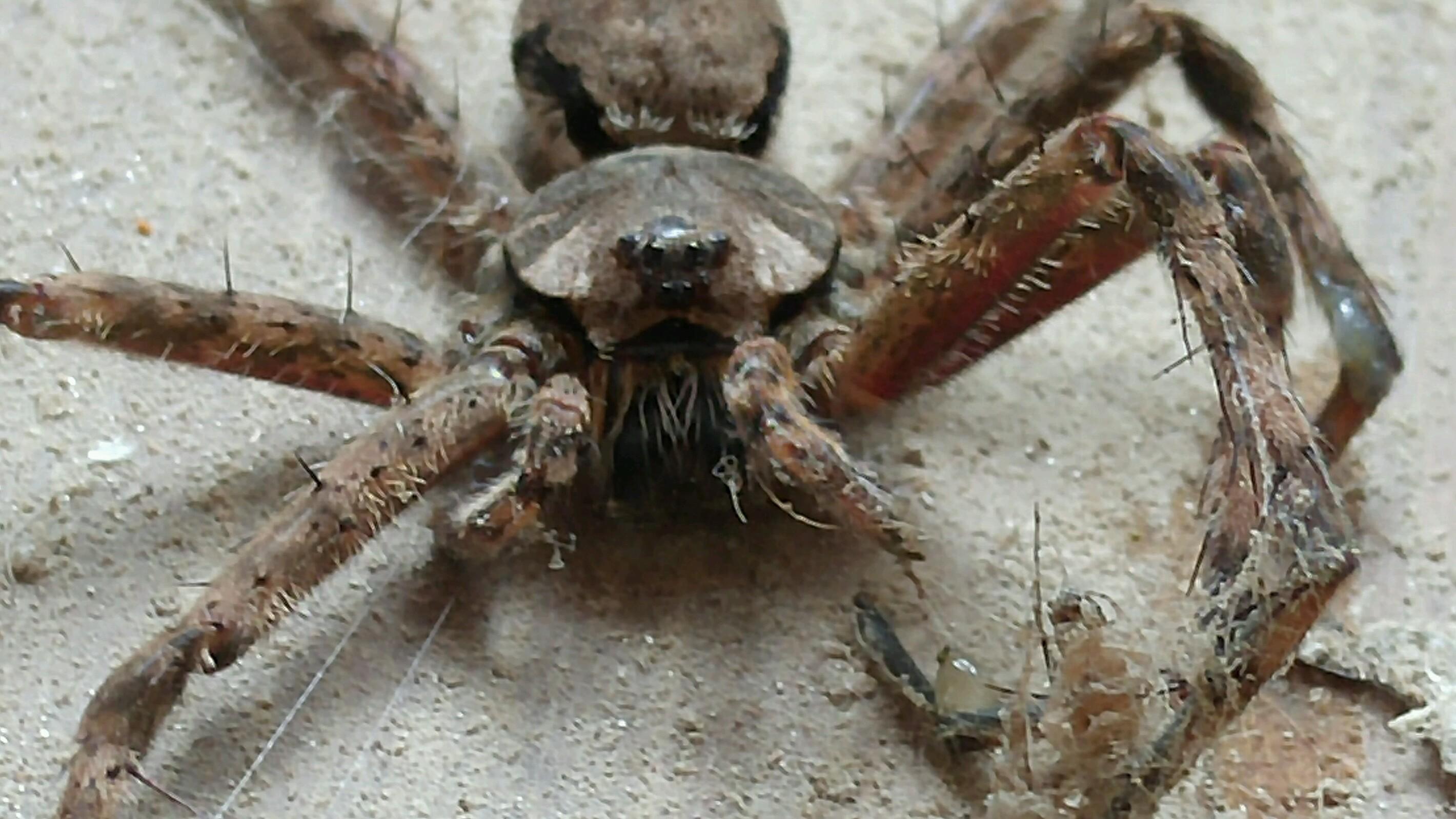Good Spider(dead).jpg