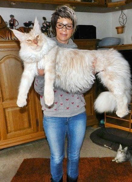 kitty kitty.jpg