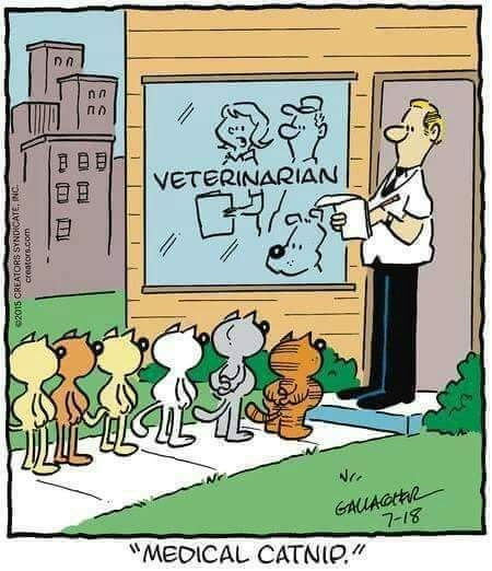 medical catnip.jpg